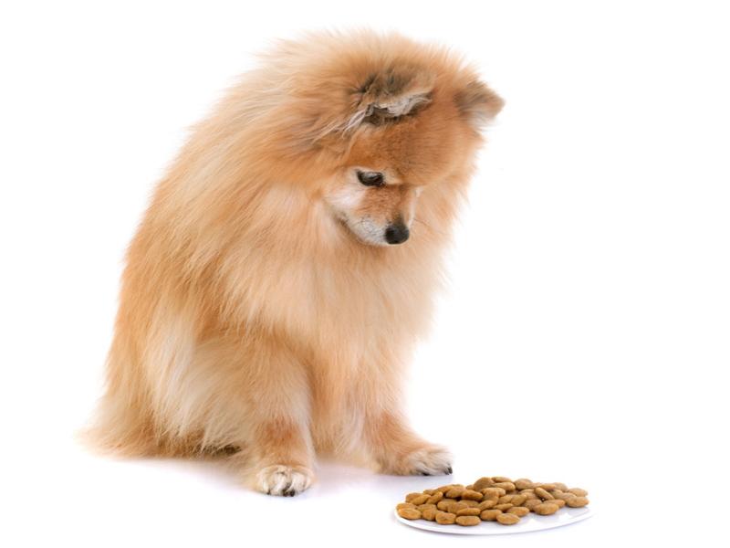 愛犬がご飯を食べないときの考えられる原因