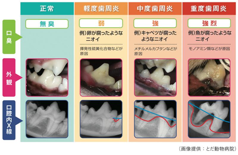 犬の口臭と歯周炎の状態を示した画像