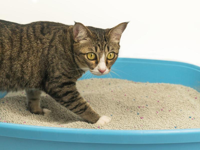 猫はなぜトイレ以外の場所におもらし(粗相)をしてしまうの?