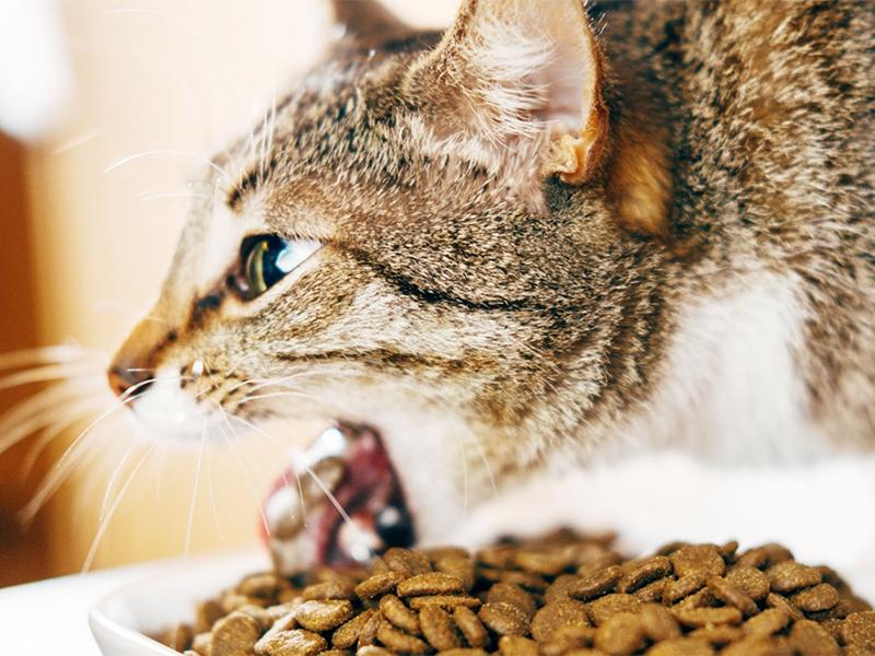 便秘の猫は嘔吐してしまうことがある