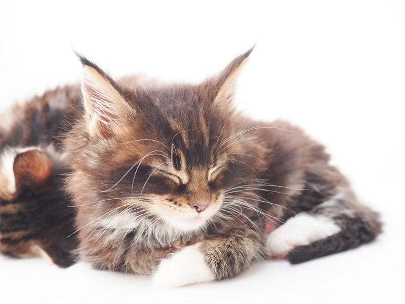 愛猫の便秘を放置したらどうなる?