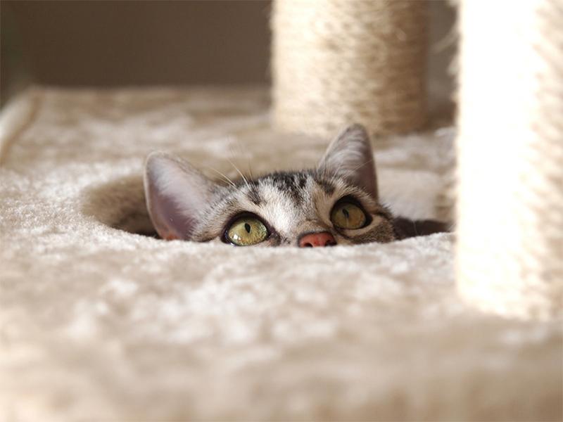 愛猫の便秘解消法とは?