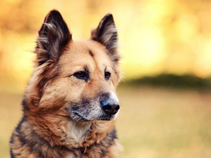 犬は乾燥肌になりやすい?乾燥肌の特徴は?