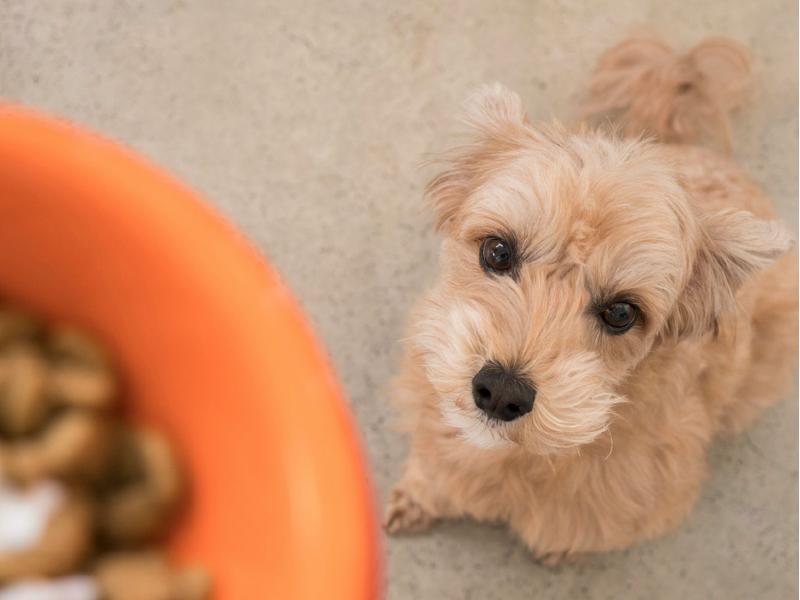 腎臓病(腎不全)の犬におすすめの食事療法のポイントを紹介!