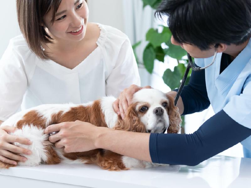 愛犬の腎臓病(腎不全)治療にはどんな方法がある?