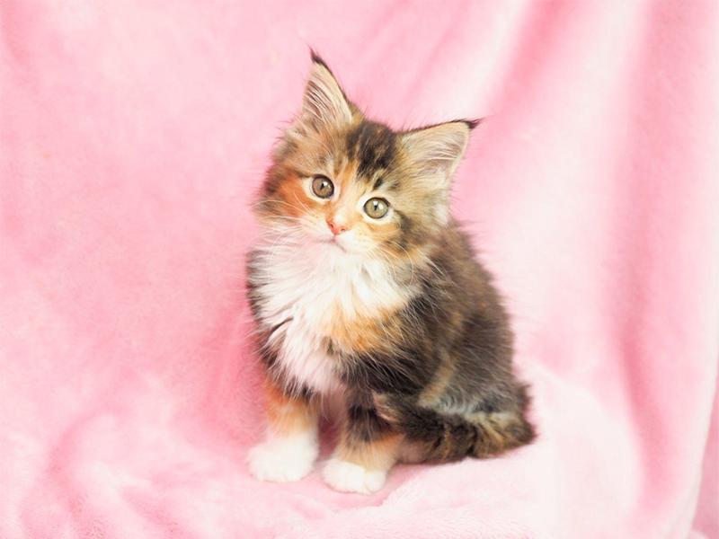 猫の腎臓病とはどんな病気なの?