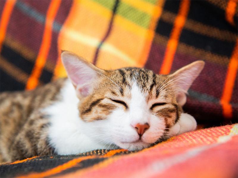 猫の腎臓病の症状