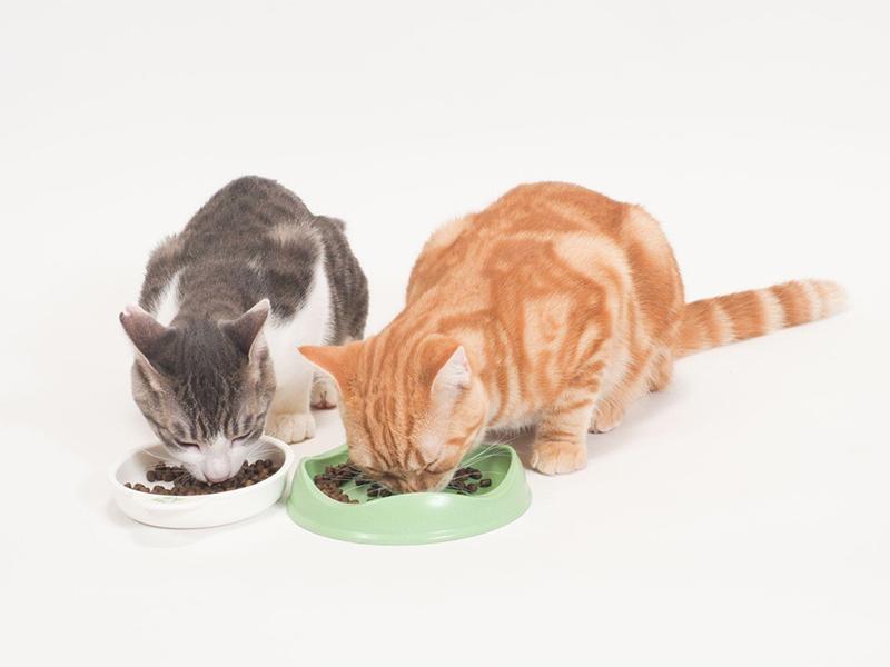 腎臓病の予防には食事や栄養管理が大切!