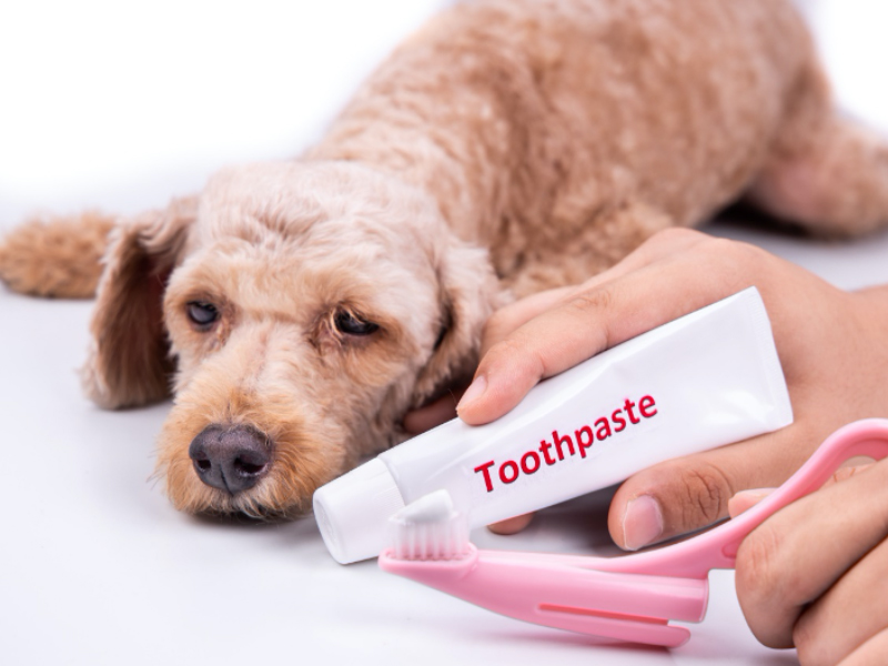 愛犬に歯みがきを受け入れてもらうためのポイント