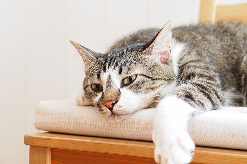 猫に食欲がなくても病気とは限りません