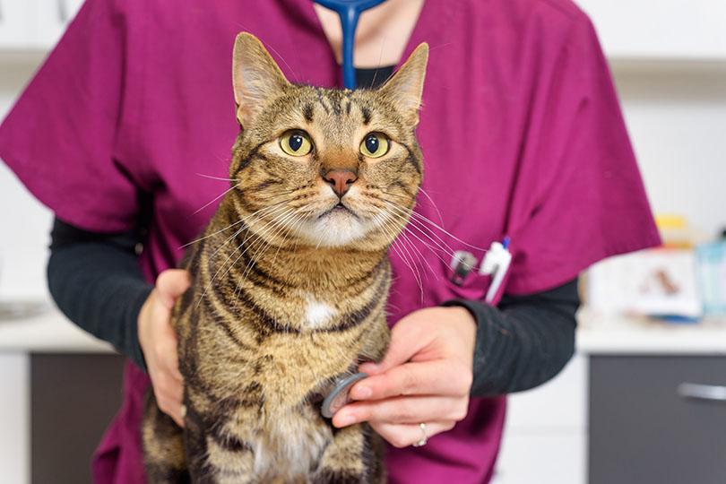 口臭だけじゃない!愛猫にこんな症状が見られたら動物病院で受診・治療をする