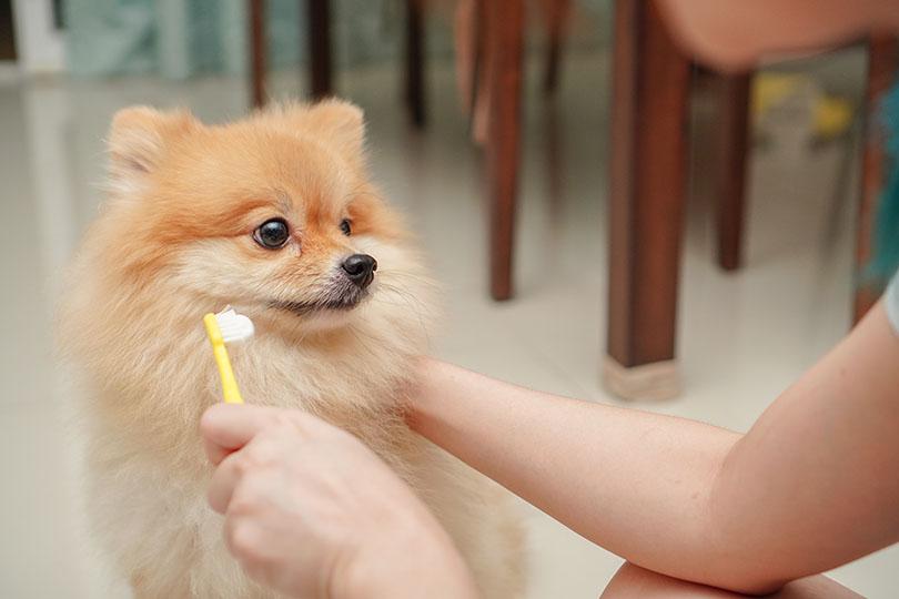 愛犬の口臭を改善・予防するには?
