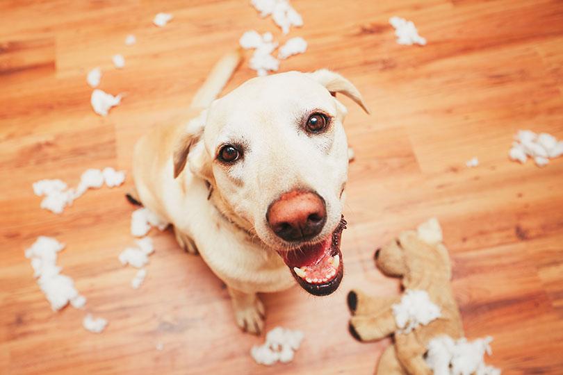 愛犬のわがままが原因でご飯を食べないときの対処法