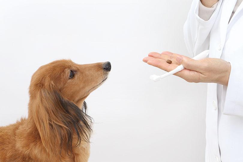 犬の歯磨きステップ2:歯ブラシが好き!にさせる