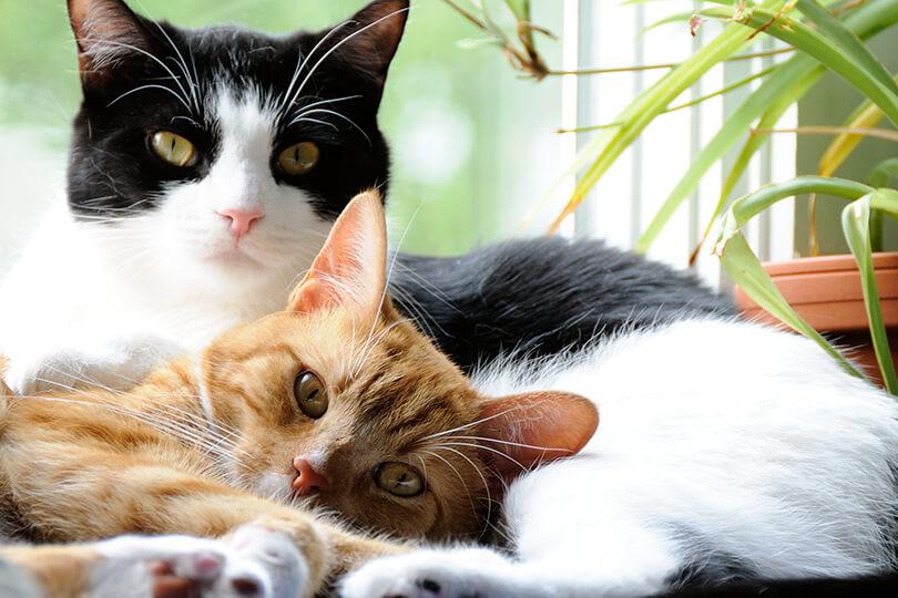 やめさせた方がよい?猫同士が噛み合いを始めた時の対応方法