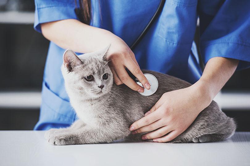 猫同士が噛んでケガをしてしまった場合の対処法