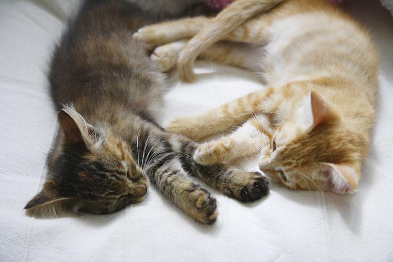猫同士の噛み合いの予防策