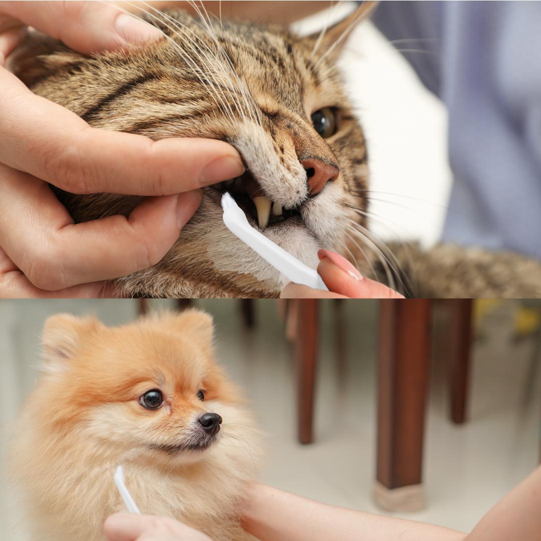 効率良く歯垢をとるなら猫用歯ブラシ