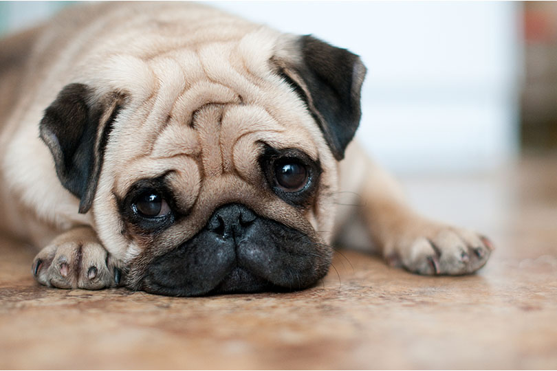 飼い主さんも愛犬のよだれには注意が必要!
