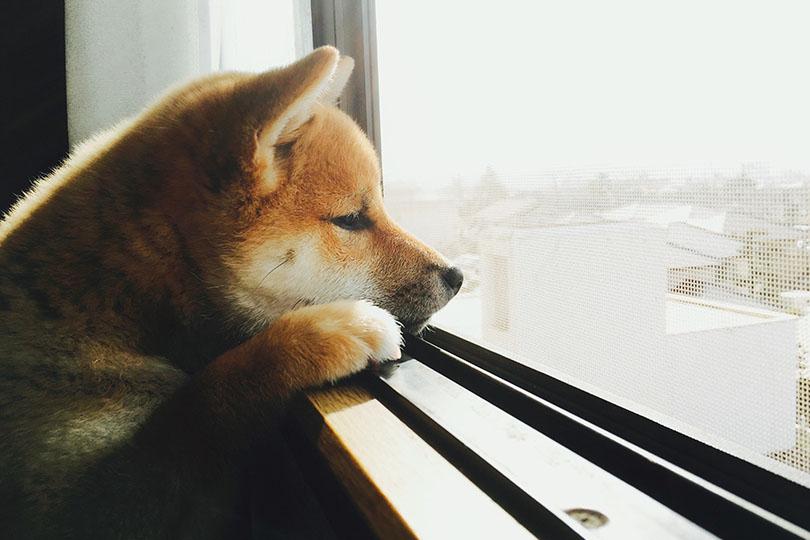 まずは愛犬のストレス度合いを確認