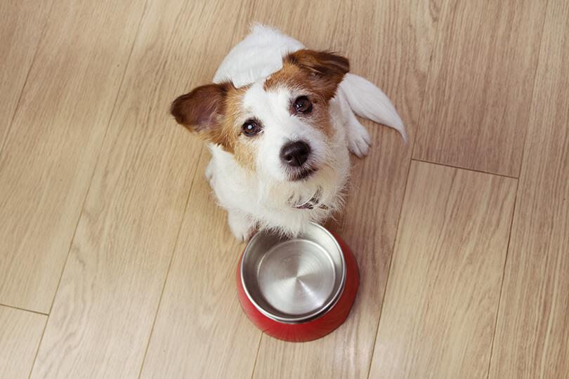 食事はどうする?愛犬が下痢になったときの対処法