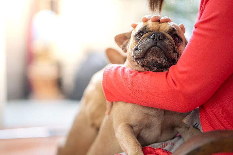 愛犬の下痢はどっち?2種類の犬の下痢について