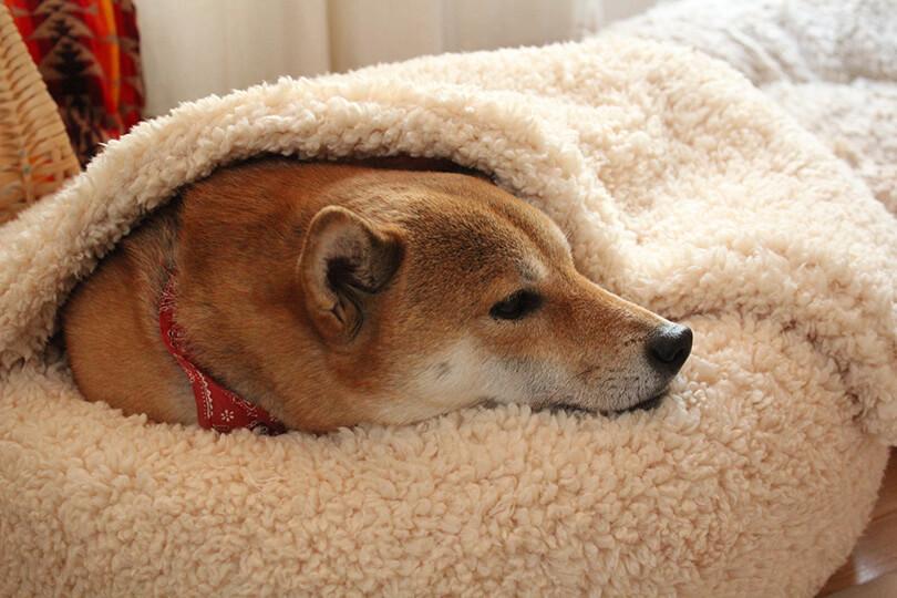 犬が下痢をしてしまう原因は?
