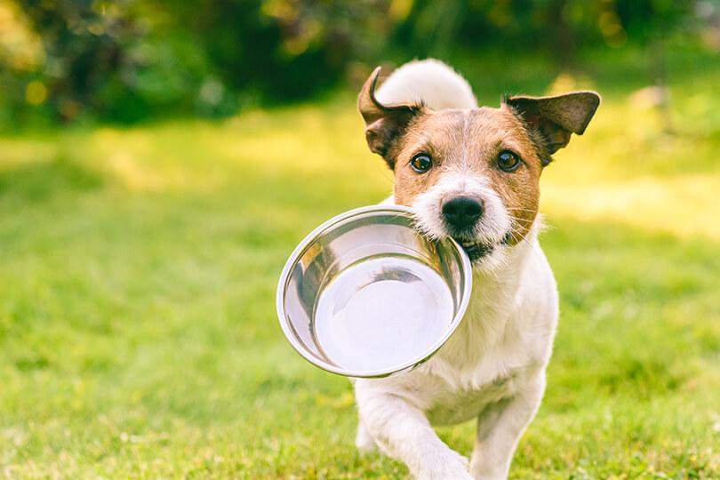 下痢をしやすい愛犬におすすめの食事